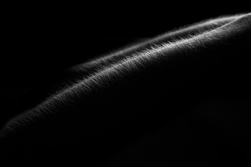 Hairs on arm in front of black background - CvK000069