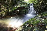 New Zealand, Marlborough Sounds, river, rain forest - WV000616