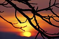 Germany, North Rhine-Westphalia, Minden, Ostwestfalen-Lippe, Sunset - HOHF000674