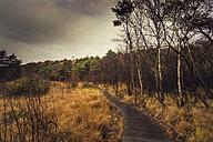 Germany, North Rhine-Westphalia, Birgelen, Birgeler Urwald, wooden hiking trail, - DWIF000030