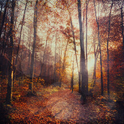 Germany, Wuppertal, deciduous forest in autumn against the sun - DWIF000024