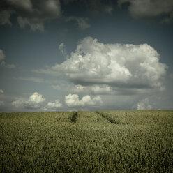 Germany, North Rhine-Westphalia, Wuppertal, Wheat field - DWIF000022