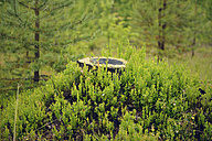 Sweden, Stroemsund, Tree stump surrounded by blueberry plants - BR000409