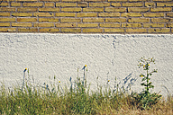 Sweden, Moelle, House wall with weed - BR000342