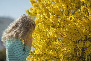Little girl smelling blossoms of forsythia - MW000043