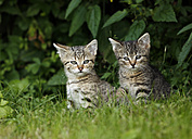 Two tabby kitten sitting in grass - SLF000345