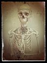 Skeleton, studio - CSF021254
