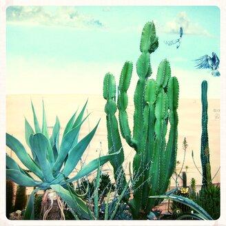 Cactus, Antwerp, Belgium - EDF000072