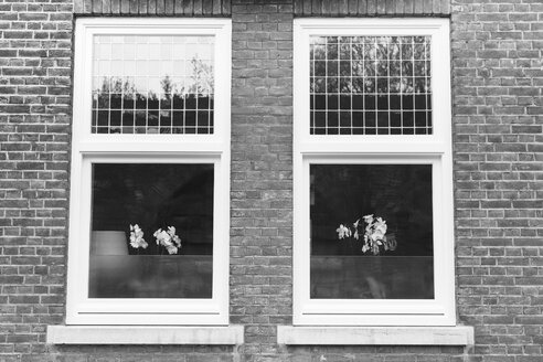 Netherlands, Maastricht, Windows with orchids - HLF000449