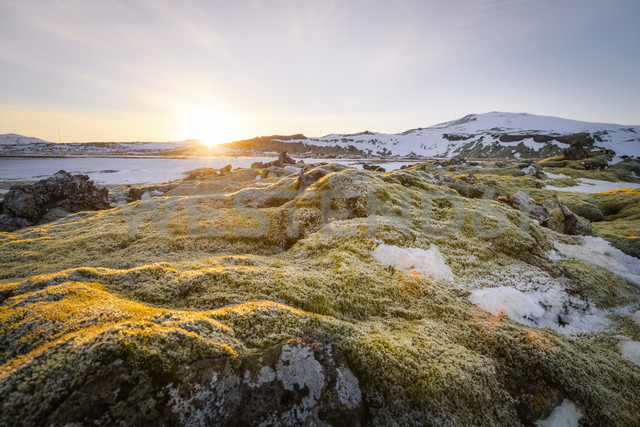 Iceland, Field of lava overgrown by moss near Dyrholaey - STCF000056