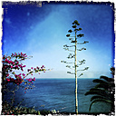 Overlooking the Atlantic Ocean, Fuerteventura, Spain - DRF000648
