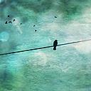 Bird on power line, Wuppertal, Germany - DWIF000056