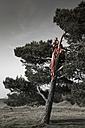 Germany, Bavaria, Froettmaning Heath, young woman wearing a taffeta dress sitting on tree - FCF000044