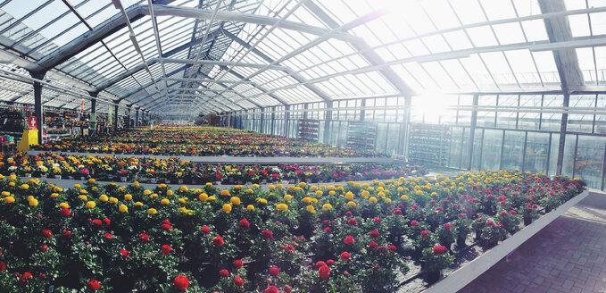Greenhouse - AF000063