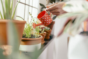 Female hand watering plant on window sill with a tiny watering can - MFF001051