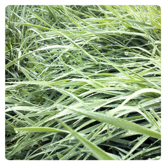 Germany, North Rhine-Westphalia, Petershagen, Wet grass in the morning. - HAWF000130