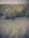 Ruegen, Baltic Sea, Mecklenburg-Vorpommern, Island, winter, Beach, sea, beach grass - MJF001051