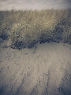 Ruegen, Baltic Sea, Mecklenburg-Vorpommern, Island, winter, Beach, sea, beach grass - MJF001051