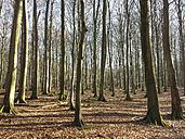 Ruegen, Baltic Sea, Mecklenburg-Vorpommern, Island, winter, Beach, sea, Buchenwald - MJF001073