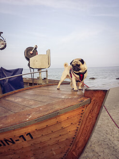 Ruegen, Baltic Sea, Mecklenburg-Vorpommern, Island, winter, Beach, sea, boat, fishing boat, dog, pug - MJ000996