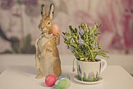 Easter bunny and flower - MJF000962