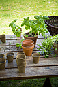 Wooden table with flower pots, nursery pots, basil and parsley - LVF001135