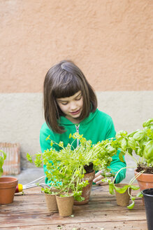 Little girl repotting parsley on wooden table - LVF001142