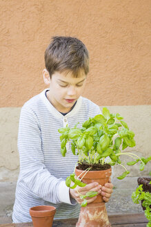 Boy repotting basil on wooden table - LVF001143