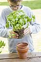 Boy repotting basil on wooden table - LVF001145
