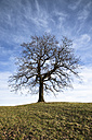 Germany, Bavaria, Single bare tree - FCF000141