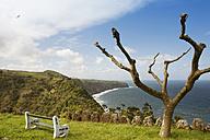 Portugal, Azores, Sao Miguel, Plane tree at Miradouro da Despe-te Que Sua - ONF000511