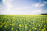 Germany, Bavaria, Rape field, Brassica Napus - SARF000543