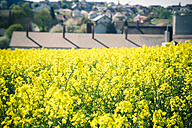 Germany, Bavaria, Rape field, Brassica Napus, and houses - SARF000548