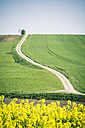 Germany, Bavaria, Field road and rape field, Brassica Napus - SARF000552
