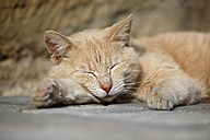 Germany, Baden-Wuerttemberg, Red tabby cat, Felis silvestris catus, sleeping - SLF000418