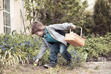 Little boy with basket finding Easter egg - ZMF000275