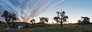 New Zealand, Chatham Island, Sihouettes of trees evening against sky - SHF001219