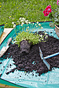 Flowers with potting soil on garden table - AKF000386