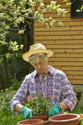Senior woman gardening - AKF000371