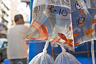 China, Hong Kong, plastic bag with goldfish at the fish market Mong Kok in downtown Kowloon - SH001236