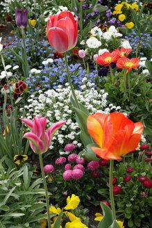 Germany, Bavaria, Wuerzburg, View of garden with tulips, Tulipa - NDF000445