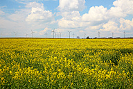 Germany, Schleswig-Holstein, Moelln, Wind turbines in yellow rape field, Brassica napus - DHL000448