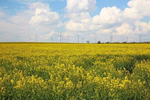 Germany, Schleswig-Holstein, Moelln, Wind turbines in yellow rape field, Brassica napus - DHL000448