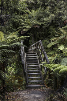 New Zealand, Abel Tasman Nationalpark, view to old stairs - STDF000041