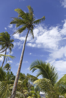 Oceania, Fiji Islands, Palms - STDF000068