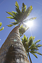 Oceania, Fiji Islands, Palm against the sun - STDF000070