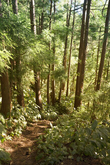 Portugal, Azores, Sao Miguel, Forest trail to Lago Azul - ONF000537