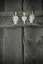 Antlers hanging on wooden wall - ASF005352