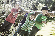 Four boys carrying log in the nature - HHF004821