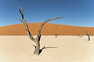 Africa, Namibia, Sossusvlei, Sand dune, Dead trees - HLF000474